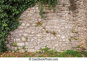 Old stone wall with ivy as rustic background