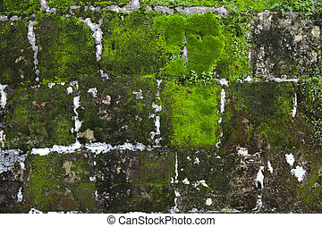 Old stone wall with moss and lichen - Old grey stone wall...