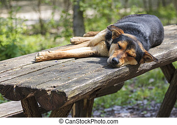 Old stray hungry dog sleeping on wooden table in the forest. Solitude.