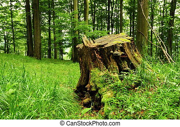Old stump in the grass