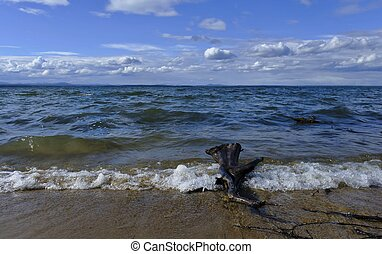 old stump of wood lying on the shore of the lake in the water