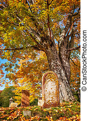 Old tombstone next to a big tree in autumn cemetery