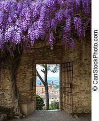 old town San Gimignano view through a doorway covered with wisteria. at the province of Siena. Tuscany, Italy