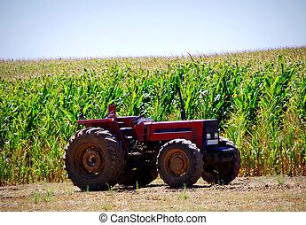 Old tractor in cornfield