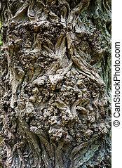 Old tree bark rough texture.