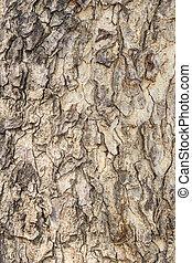 Old tree bark texture