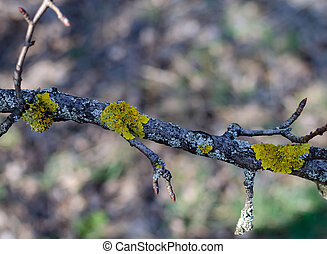old tree covered with orange moss in the forest on a sunny day