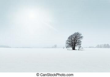 Old tree in a field, winter scene