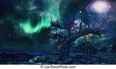 Old tree in arid rocky land. Canyon at the horizon. Aurora and galaxy in the sky