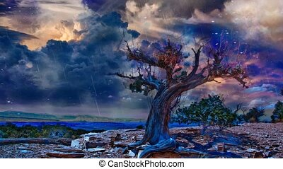 Old tree in arid rocky land. Canyon at the horizon
