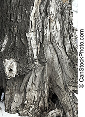 old tree in close up - surface of the old tree