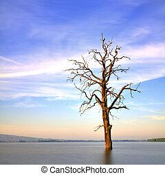 Old tree in lake at sunrise landscape