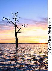 Old tree in lake at sunset landscap