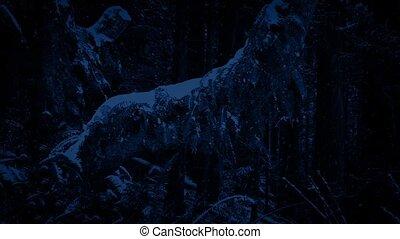 Old Tree In Snowfall At Night