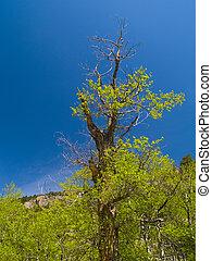 Old Tree in Spring