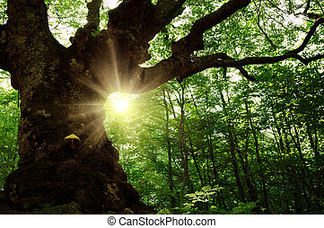 Old tree in the forest - Summer landscape with old tree in...
