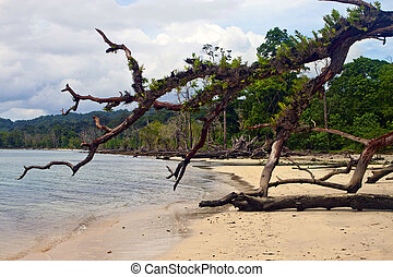 Old tree laying on a tropical beach, Havelock island, India