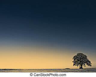 old tree on a meadow
