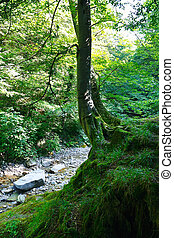 Old tree on a rock in the relict forest with a mountain stream on sunny day