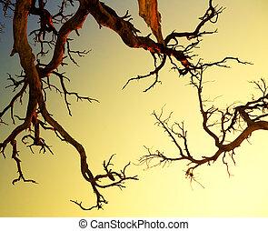 old tree on