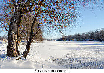 Old tree on the bank of the snow river
