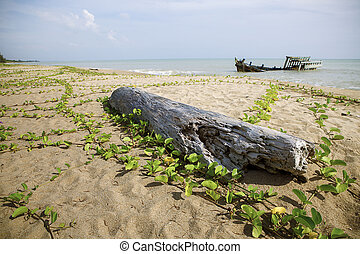 old tree stump and wreck boat on sea beach