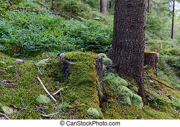 Old tree stump covered with moss in the forest