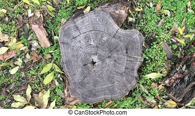 old tree stump in a park, view from above