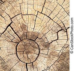 old tree stump texture background