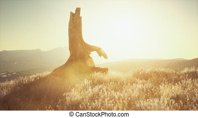 old tree stump trunk on the hill at sunset