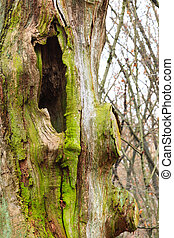 Old tree trunk detail in forest