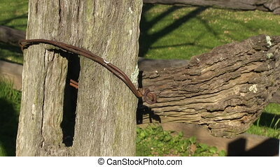 Old tree trunk on a ranch - A steady medium shot of an old...