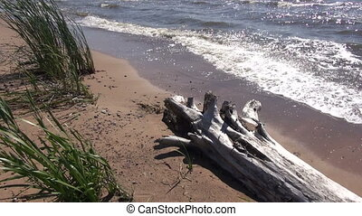 old tree trunk on summer sea beach