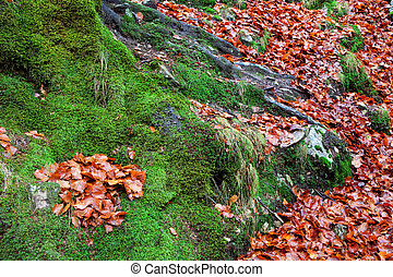 Old tree trunk with moss surrounded