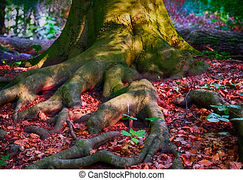 old tree with moss on roots in autumn forest