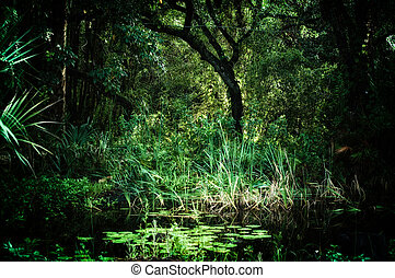 old trees and lotus pond inside sub tropical jungle