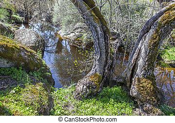 Old trees at Cornalvo Natural Park, Extremadura