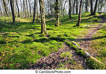 Old trees in a beautiful forest in springtime