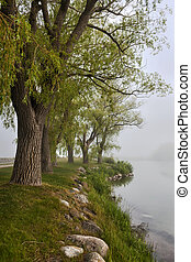 Old trees on foggy shore