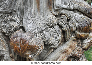 Old tree's strange knot.