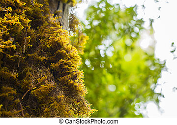 Old trees with lichen and moss in New Zealand