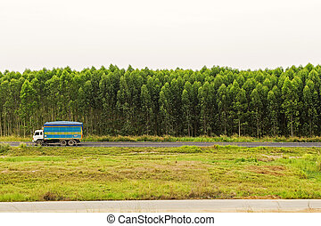 Old truck on the road with eucalyptus forest.