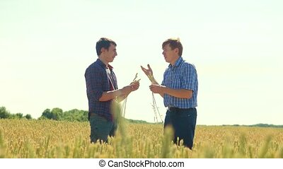 old two farmers explore are studying. man Wheat Field summer...