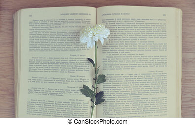 Old vintage book with flower