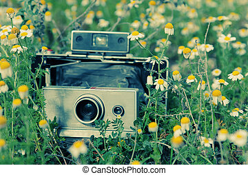 old vintage camera in chamomile field