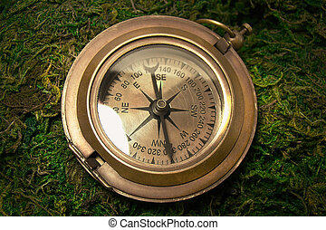 Old vintage compass on a background of moss.