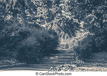 Old vintage photo. Park Bushes forest steps
