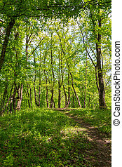 old walkway in the forest in the Sunny spring afternoon