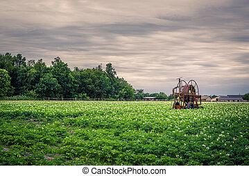 Old water pump on a potato field