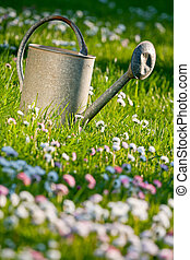 Old watering can in a meadow